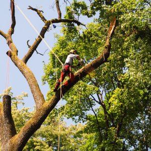 Obrezovanje drevja spomladi